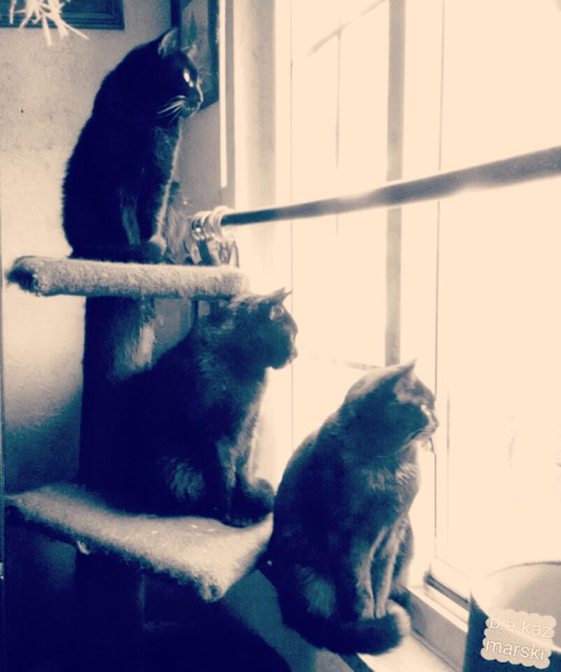 three black cats at window