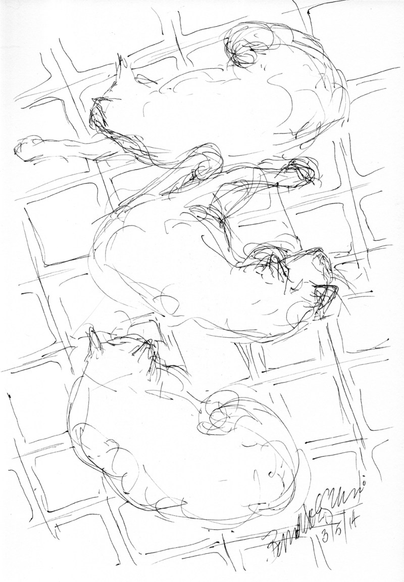 ink sketch of three cats on floor