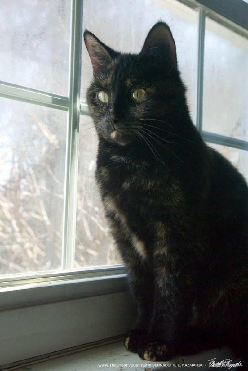 Sienna looks lovely on the windowsill.