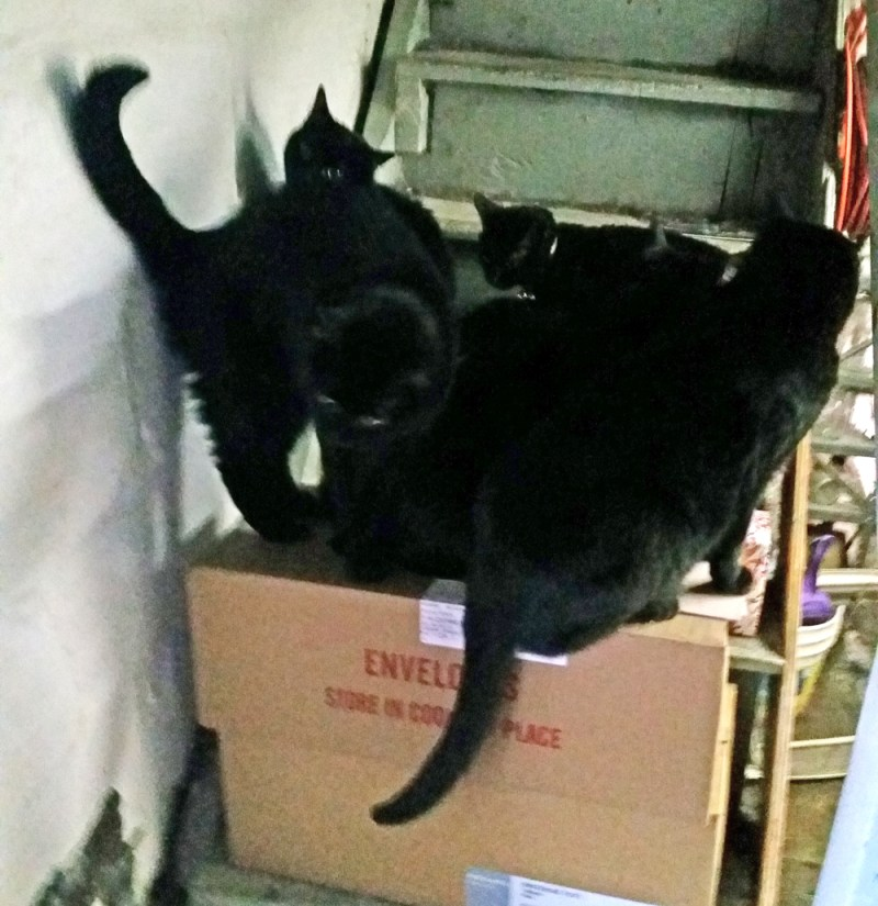 five black cats on box