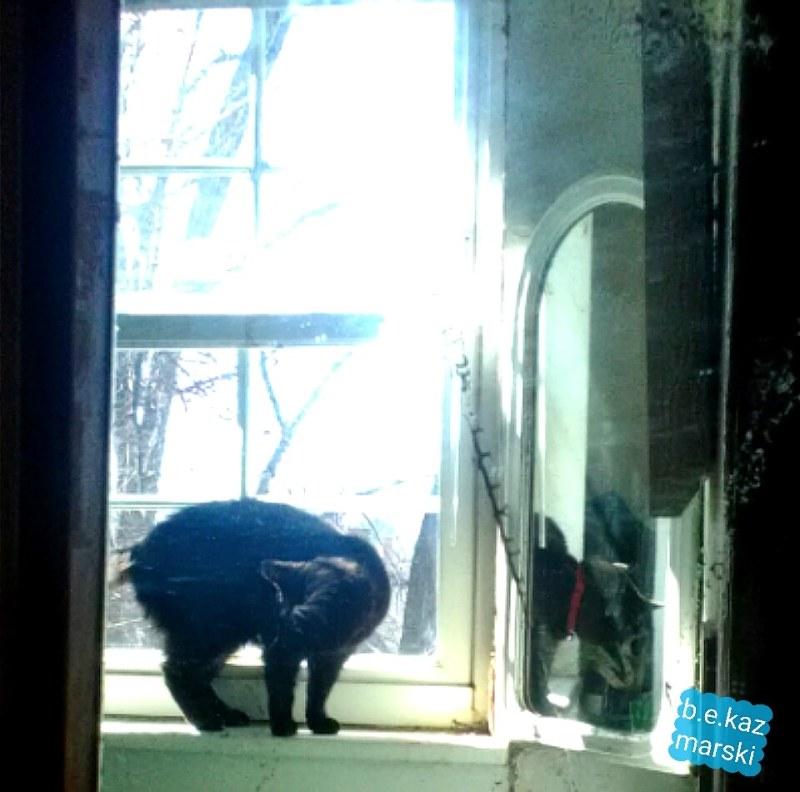 black cat in mirror