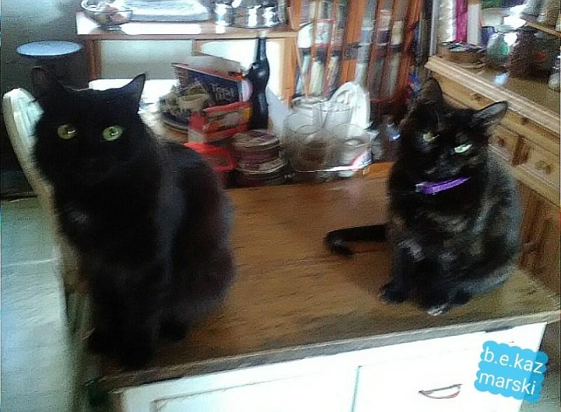 black cat and tortoiseshell cat