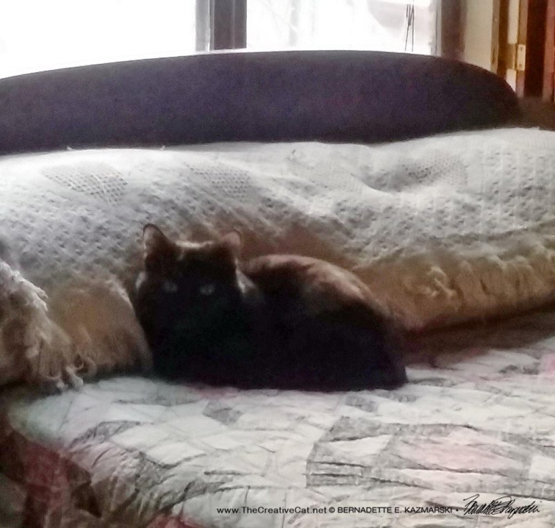 They always seem to find this spot on the bed.
