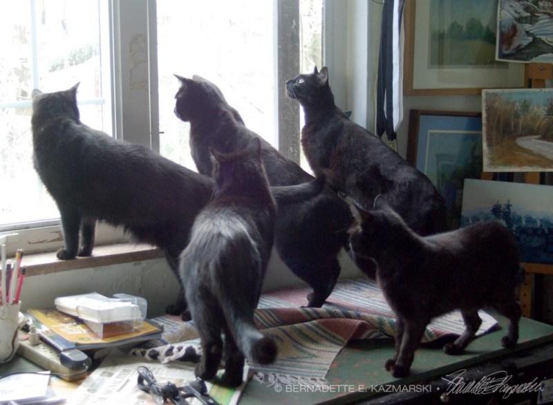 five black cats at window