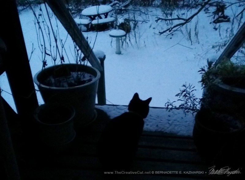 Mimi on the deck at dusk. poems of rescue
