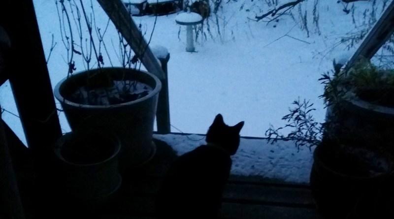 black cat on deck in snow dusk