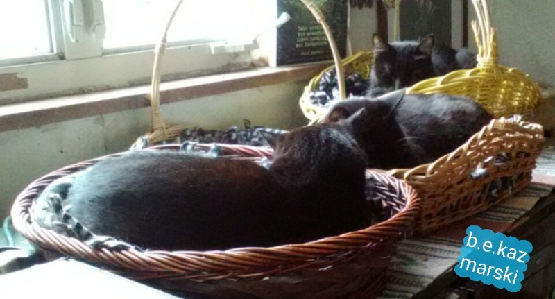 three cats in baskets