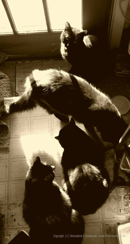 How many black kitties?