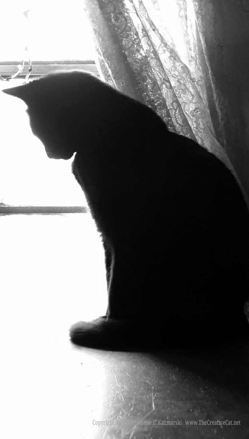 Bella pauses for the purr-fect silhoutte.