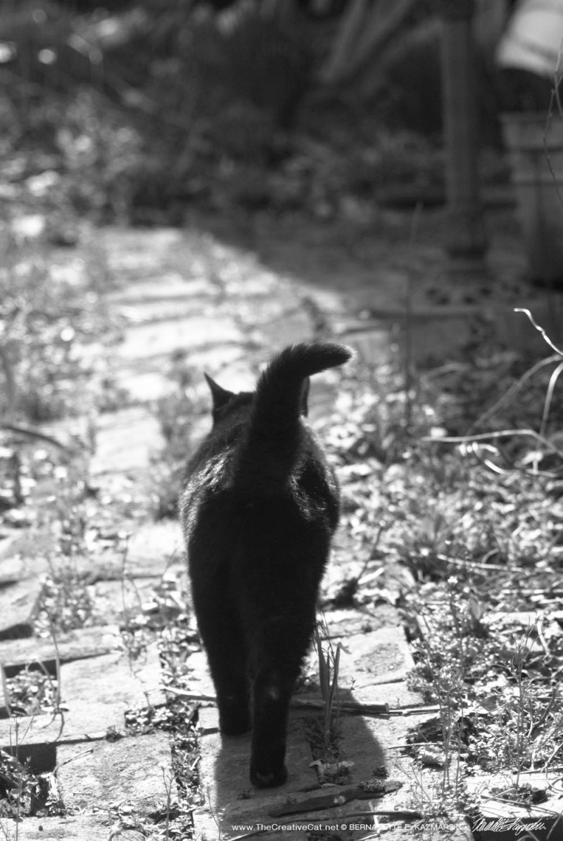 Mimi walks down the garden path.