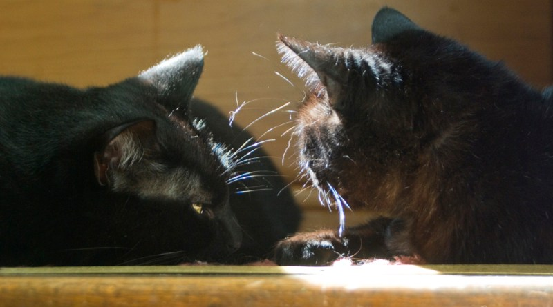 Giuseppe attentively listens to Mimi.
