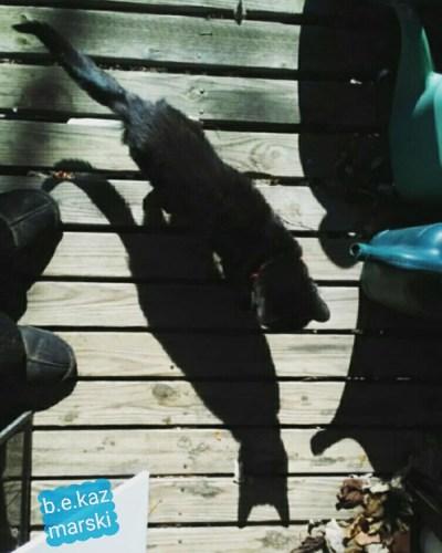 Mimi cool shadow 1.