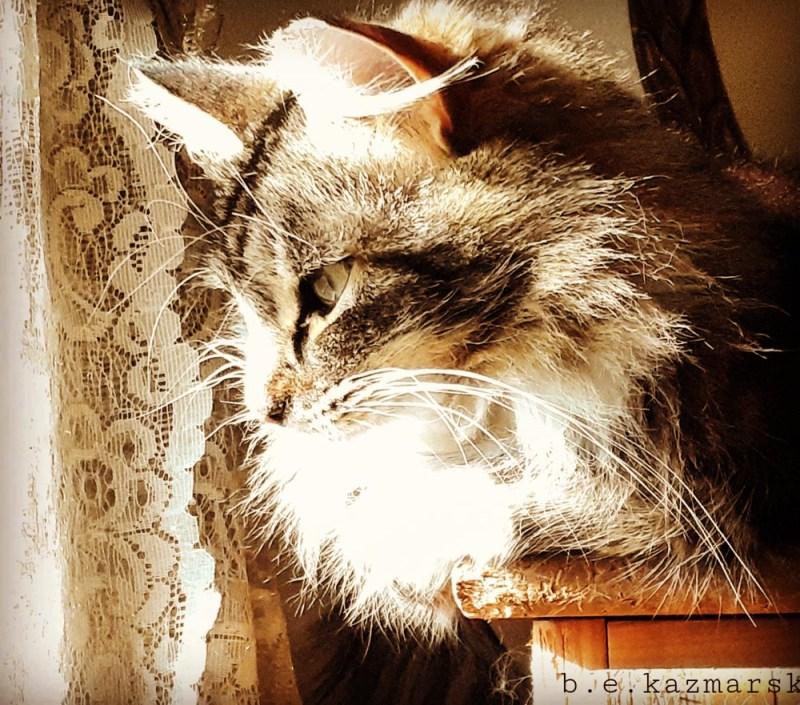 tabby cat in sunlight