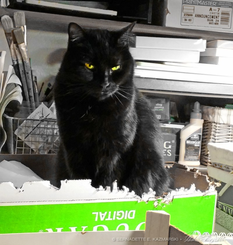 black cat in green box