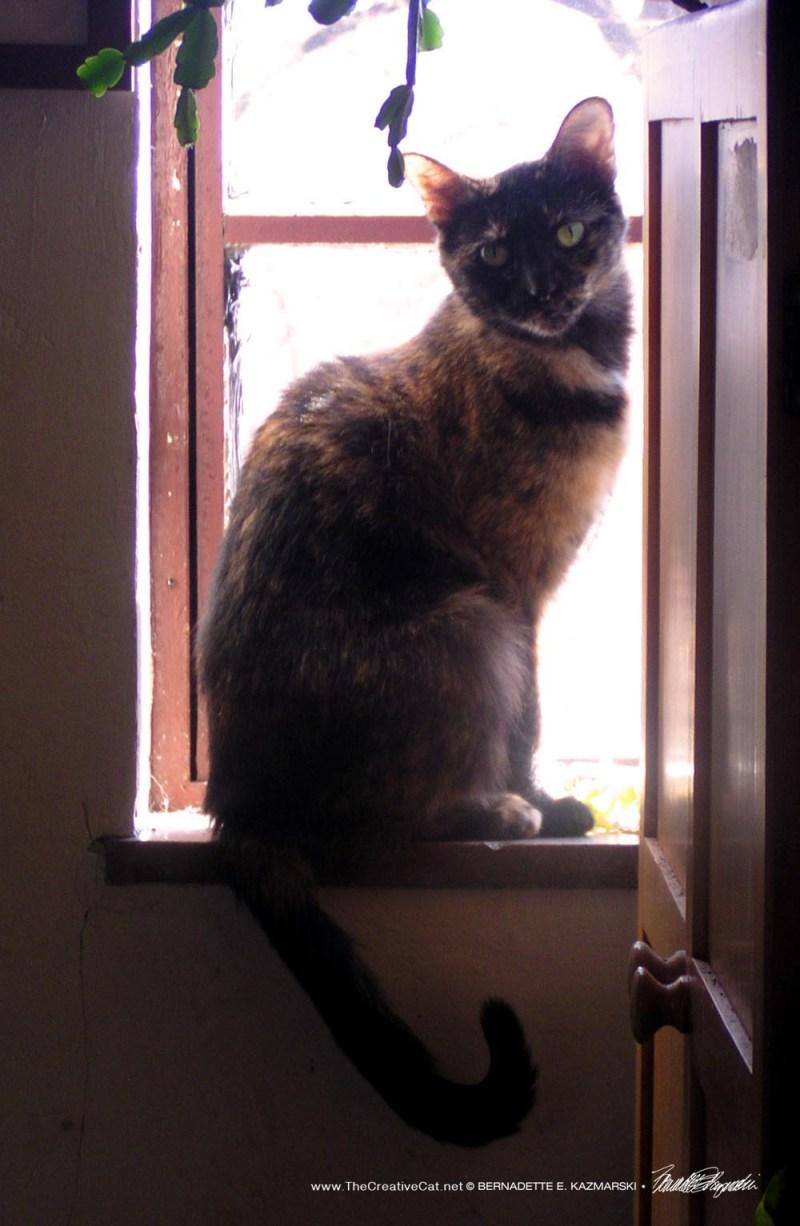 Kelly on the windowsill