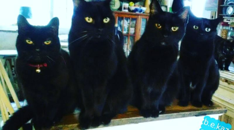 four black cats in the kitchen