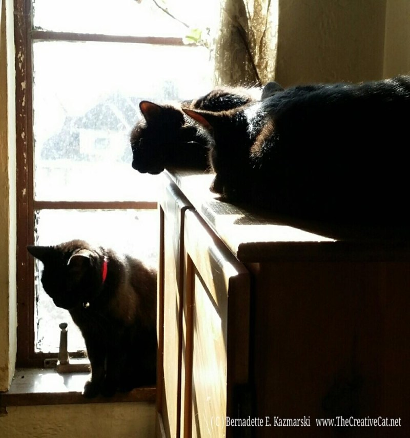Sleepy sunworshippers, Mimi, Hamlet and Jelly Bean.