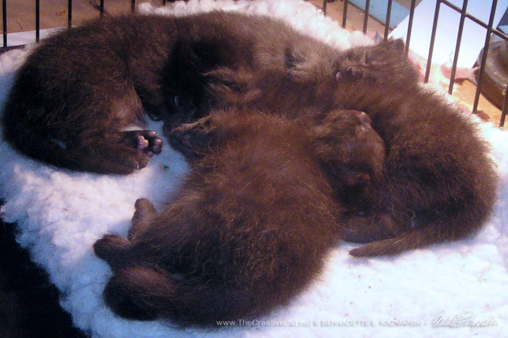 From the Archives: Baby Pictures, Four Tiny Housepanthers