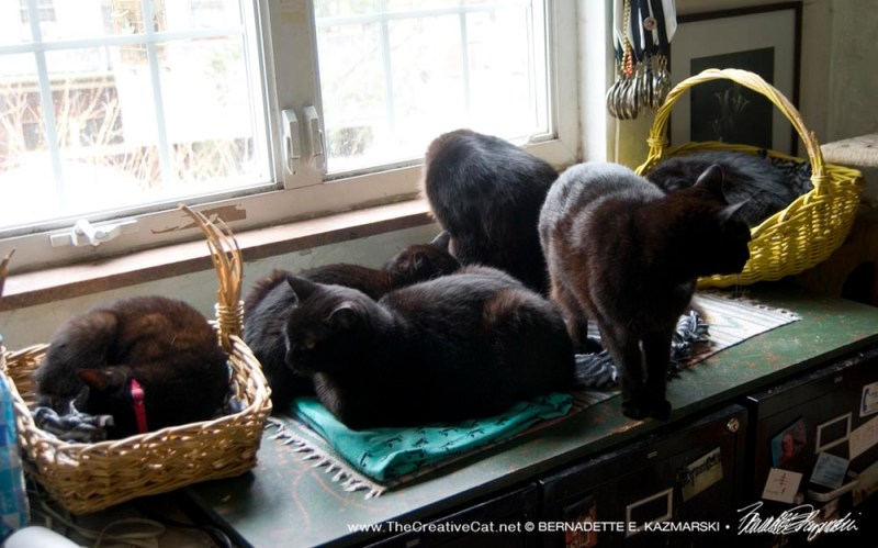 Six black cats.