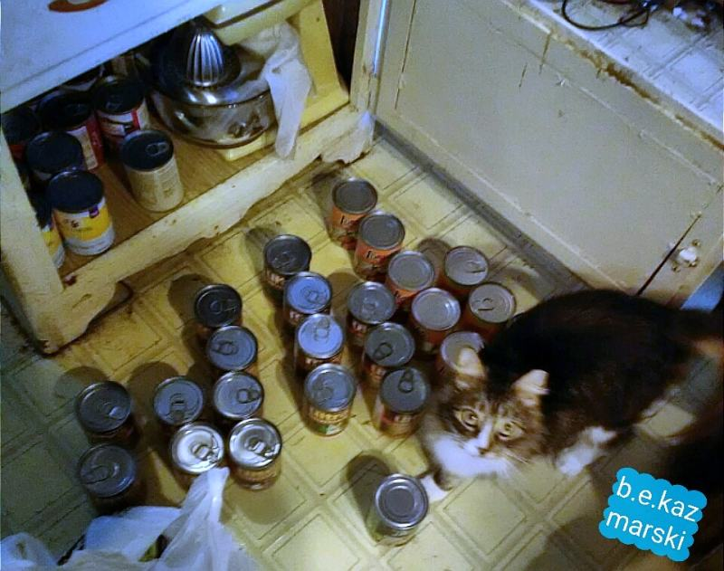 cat with cat food cans