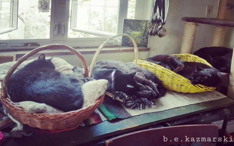 five cats in baskets