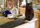 black cat on cookbook