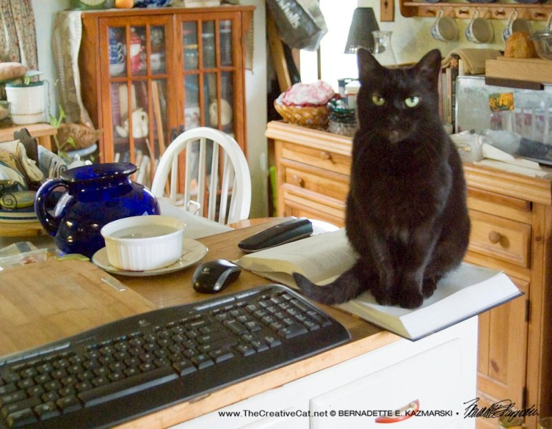 black cat on cookbook