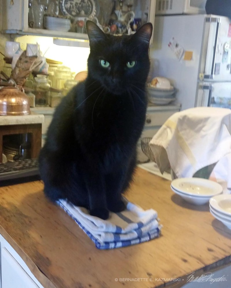 black cat on dishtowels