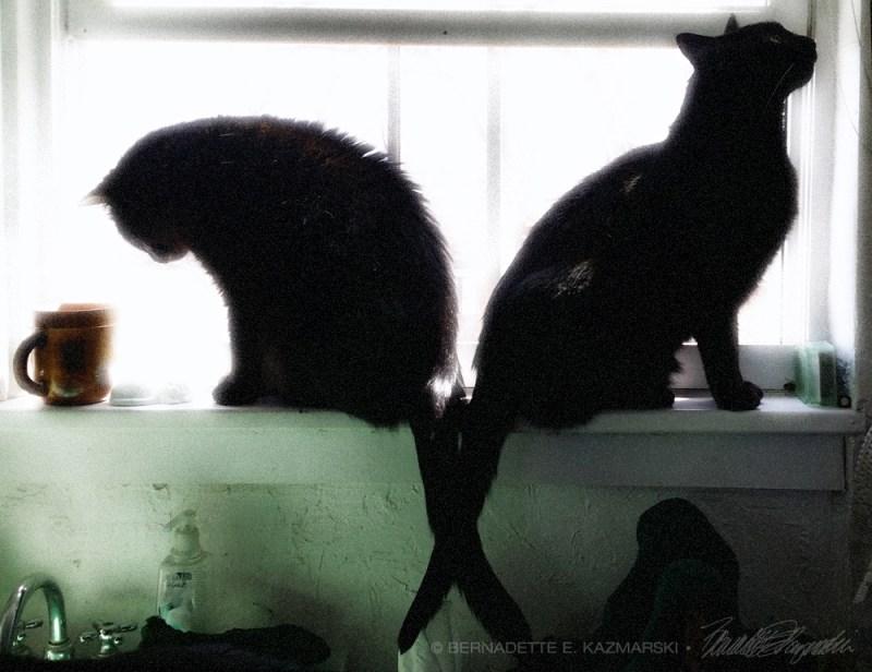 two black cats on windowsills