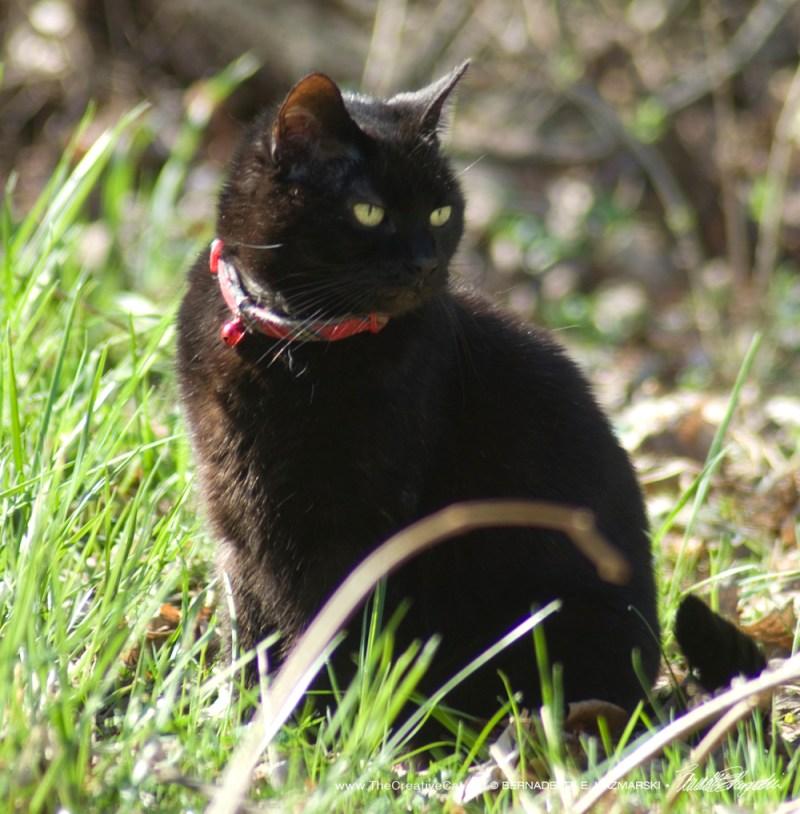 Mimi enjoys the sun.