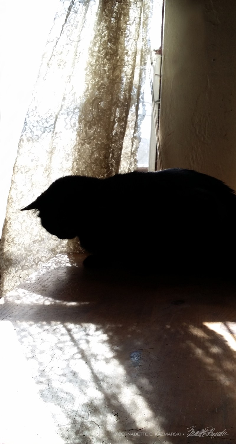 black cat with lace curtains and shadows
