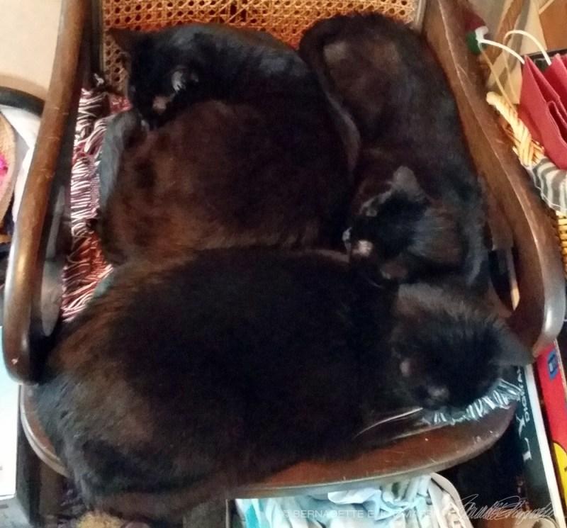 three black cats on rocker