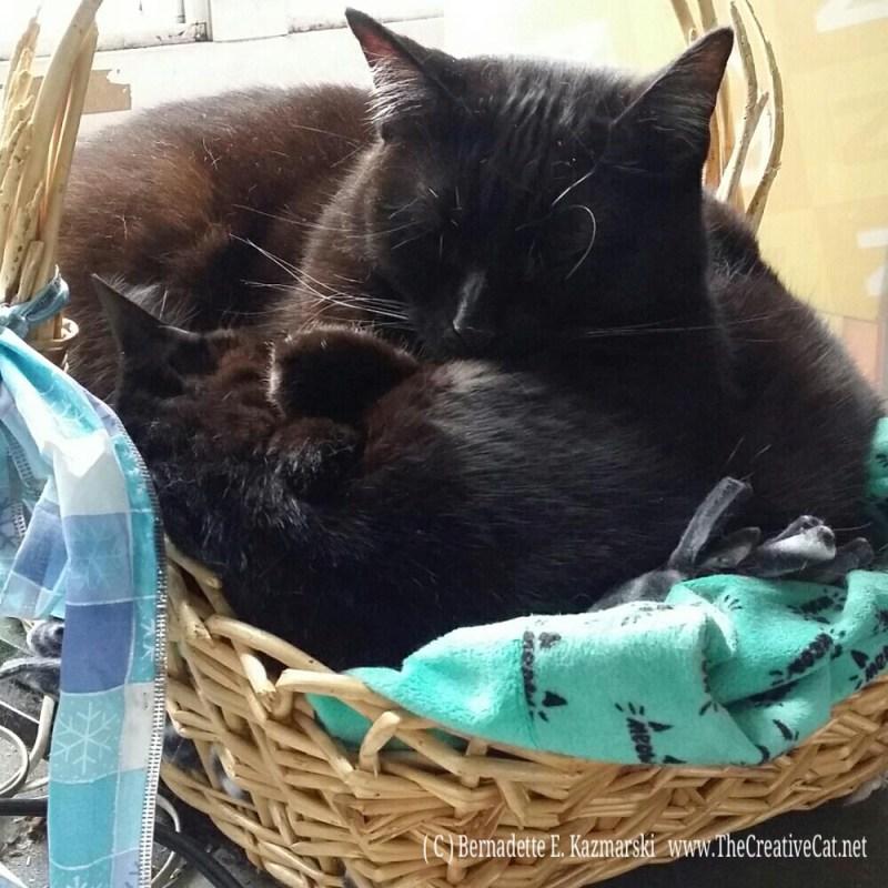 Some serious cuddling.