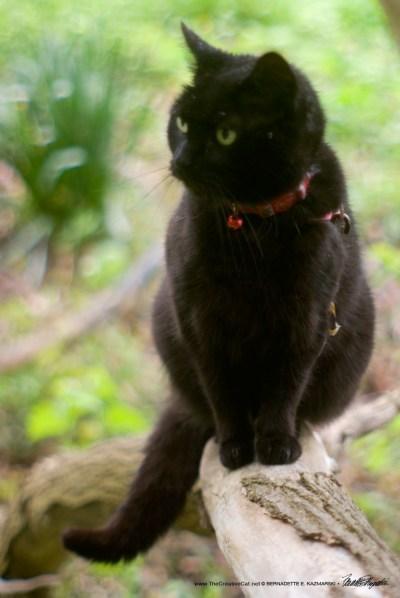 Mimi in her recumbent outdoor cat tree.