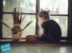 Such a pretty studio kitty.