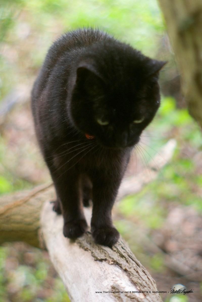 Mimi walks the branch.