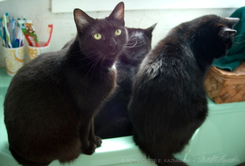 three black cats in sink