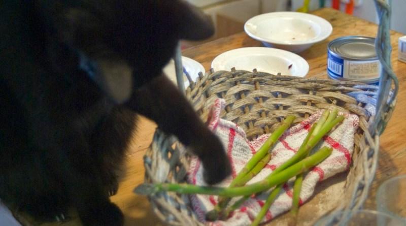black cat with asparagus