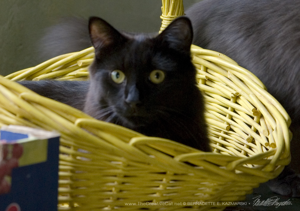 Who's in That Basket Today? It's Hamlet!