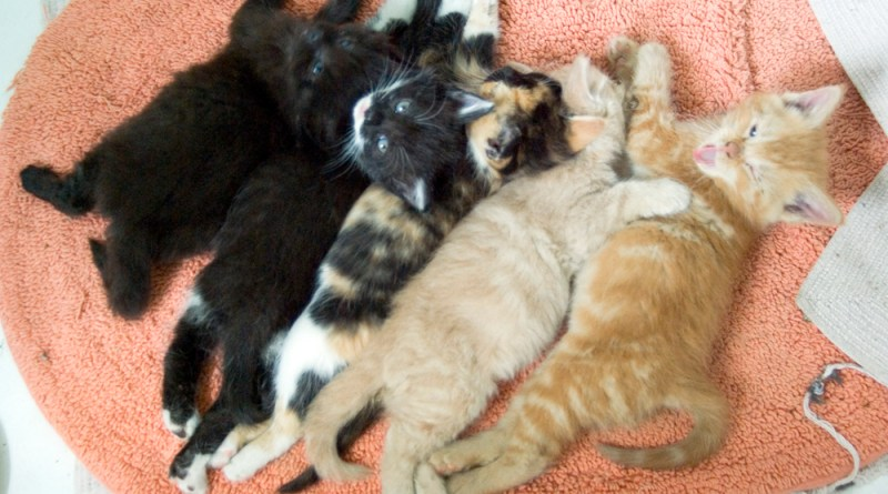 Five beautiful kittens!
