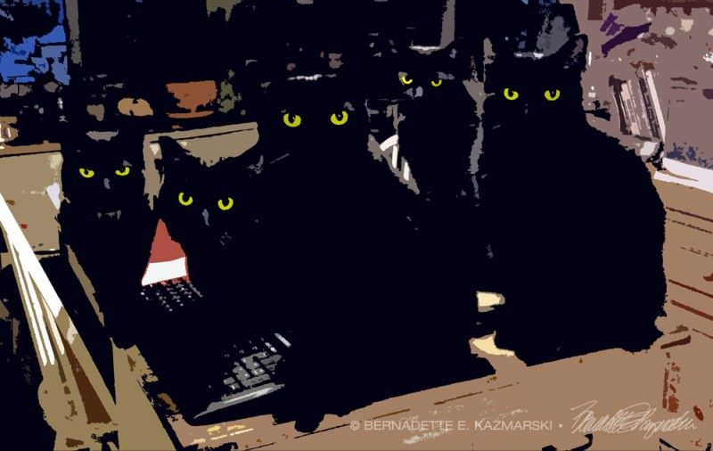 five black cats posterized