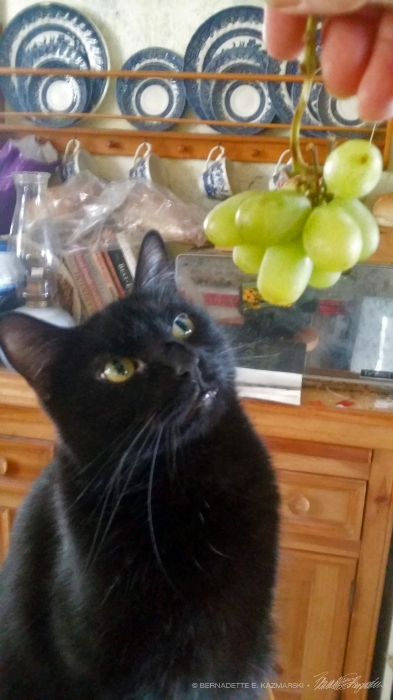 black cat with grapes