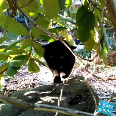 black cat under bush