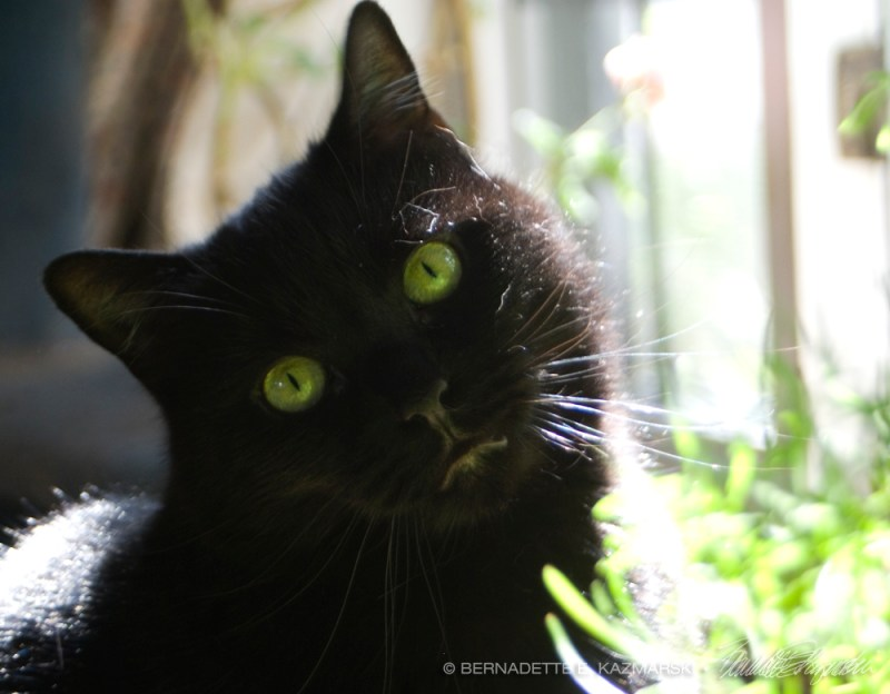 black cat with green eyes
