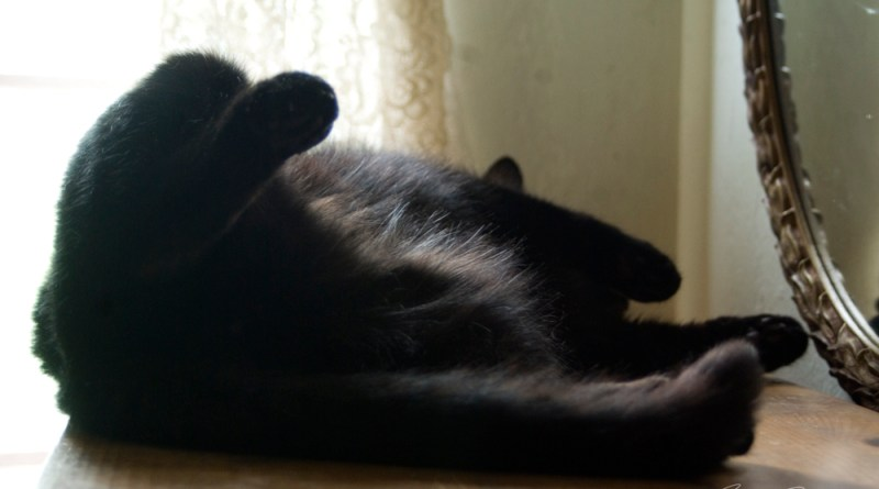 black cat sleeping on back