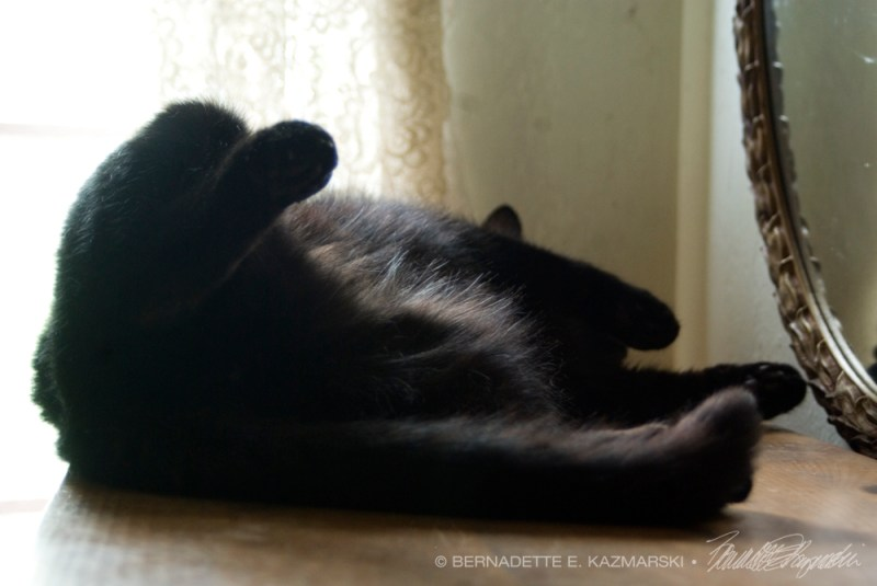 black cat sleeping on back