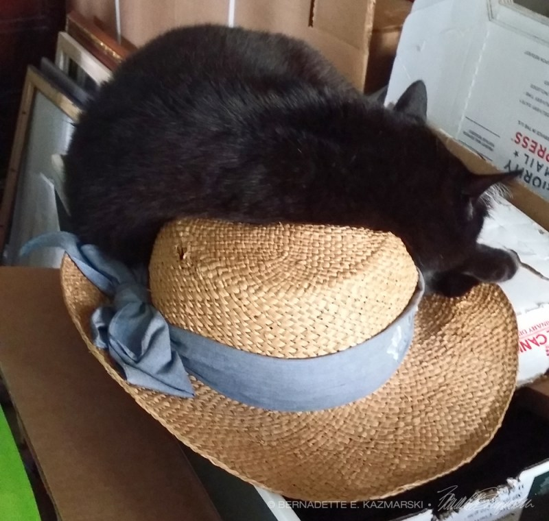 black cat with straw hat
