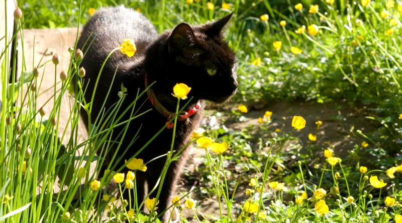 Buttercups and Chives and Mimi
