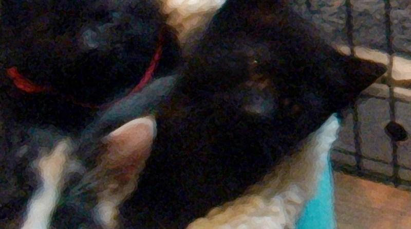 Hi kittens!
