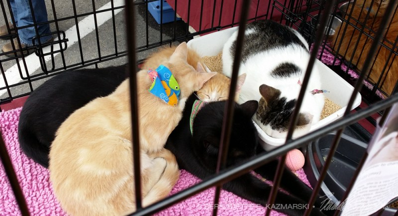 pile of cats in cage